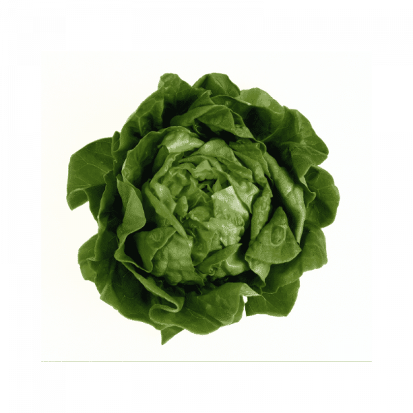 ProEx Food Leafy Green Solutions